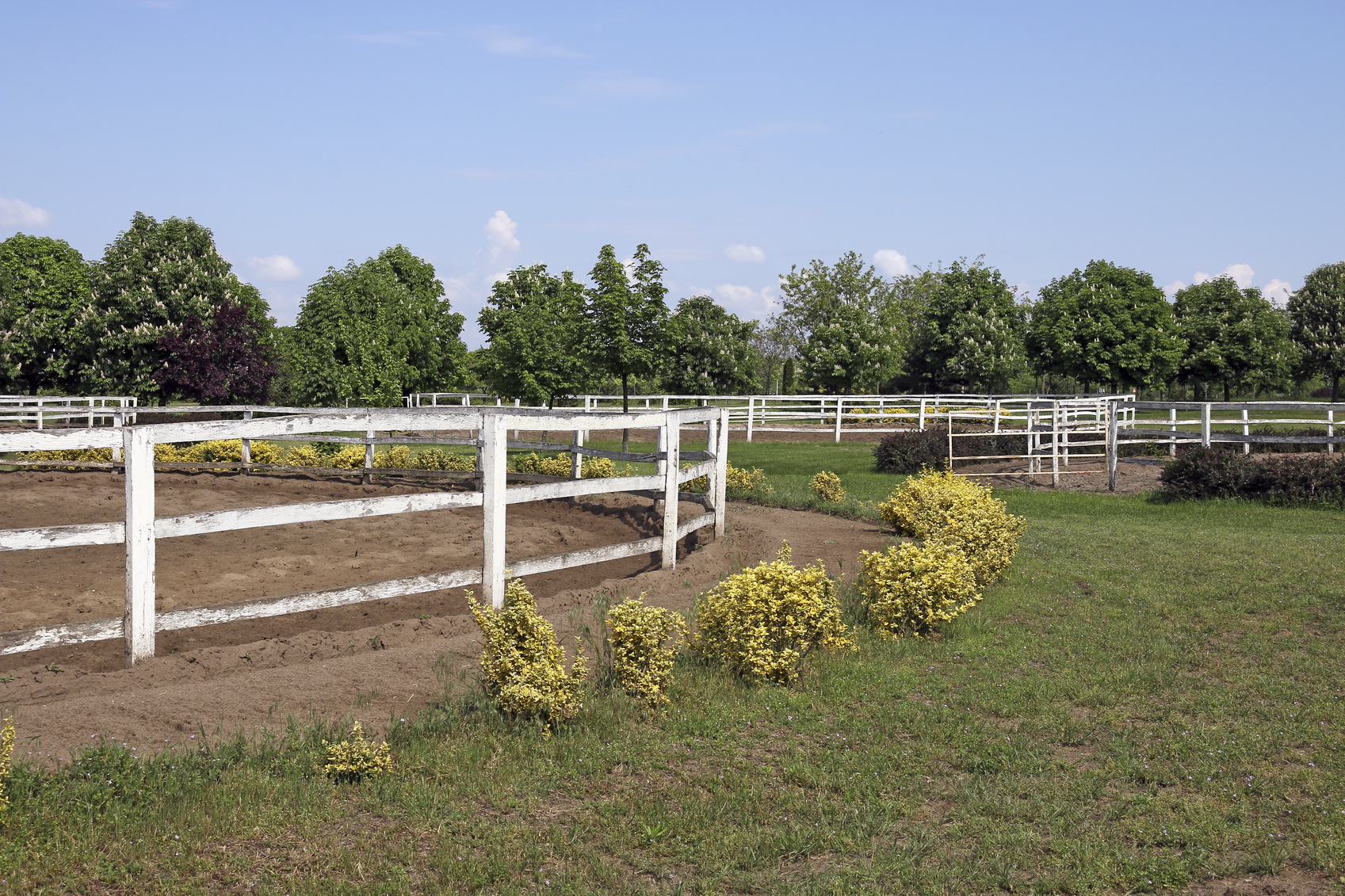 ranch with white corral for horses
